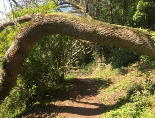 Holiday in Exmoor For a Hands on Exmoor National Park Experience