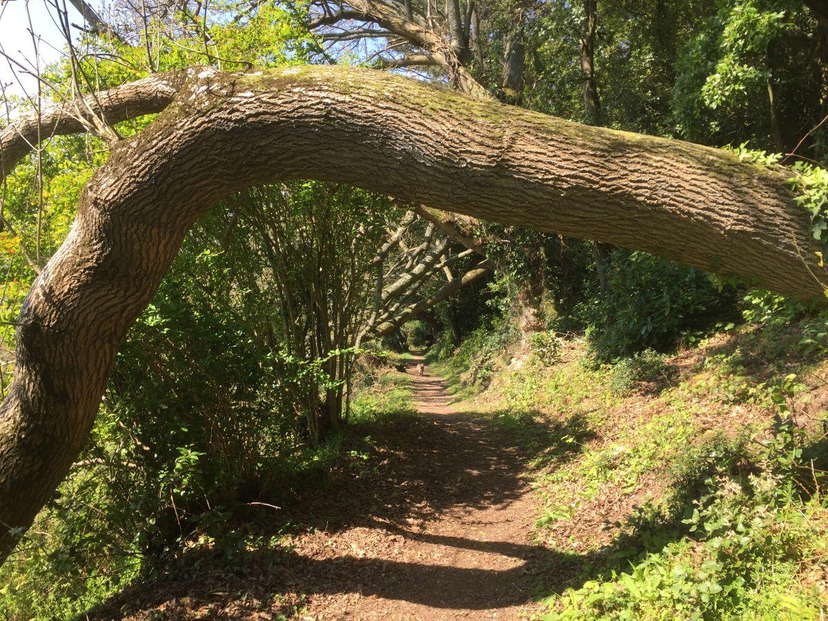 Walks on Exmoor