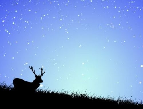 HOLIDAY LODGES & COTTAGES – FOR THE EXMOOR DARK SKIES FESTIVAL